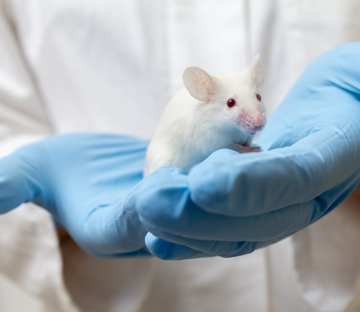 Researchers Develop New Mice Models for SMA Types 2 and 3