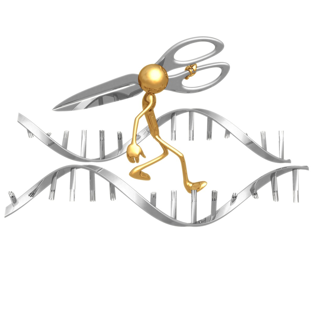 Gene Targeting Therapy Investigated in SMA Cells