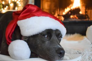 peace, holidays, Christmas, dog