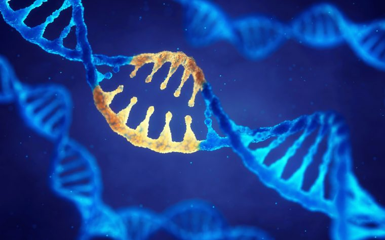gene therapy and SMA