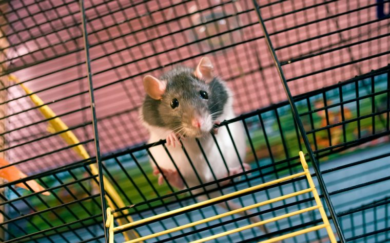 Scholar Rock Therapy Prevents Additional Atrophy in Mice with Muscle Wasting, Study Shows